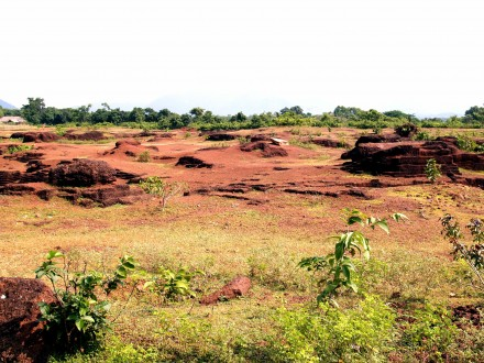 Figure 124 - Laterite field, rather barren compared to the lush vegetation in the background (Orissa, India).