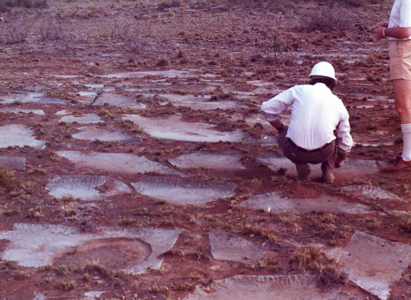 Figure 111A - Preserved mud cracks in limestone (Ulco. S. Africa).