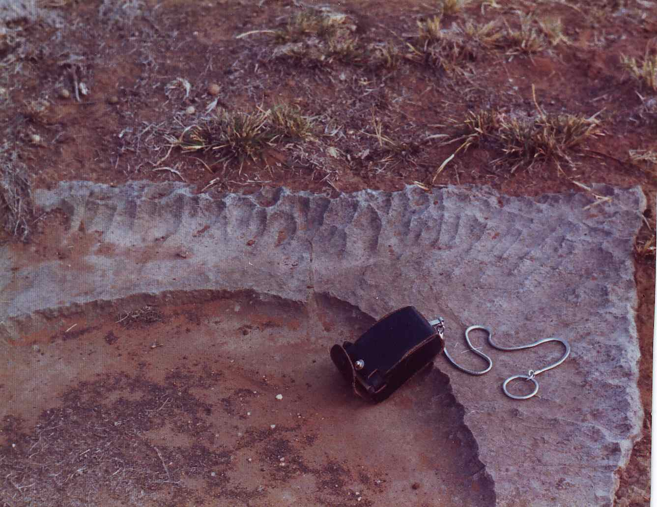 figure 111B - Close view of one of the mud crack plates (Ulco. S. Africa)