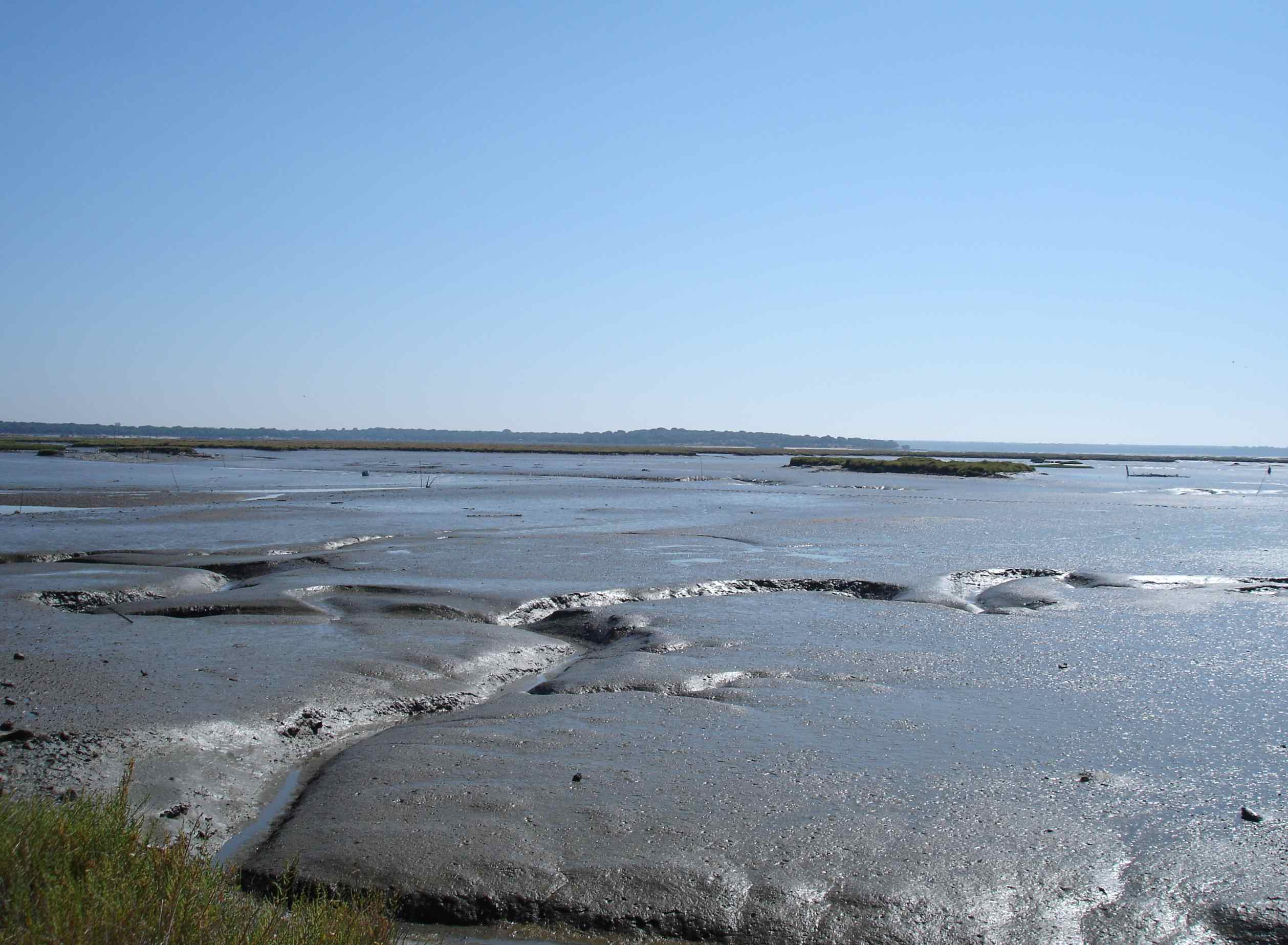 Figure 102F - Present day mud flats rich in burrowing animals (Sado River Estuary, Portugal).